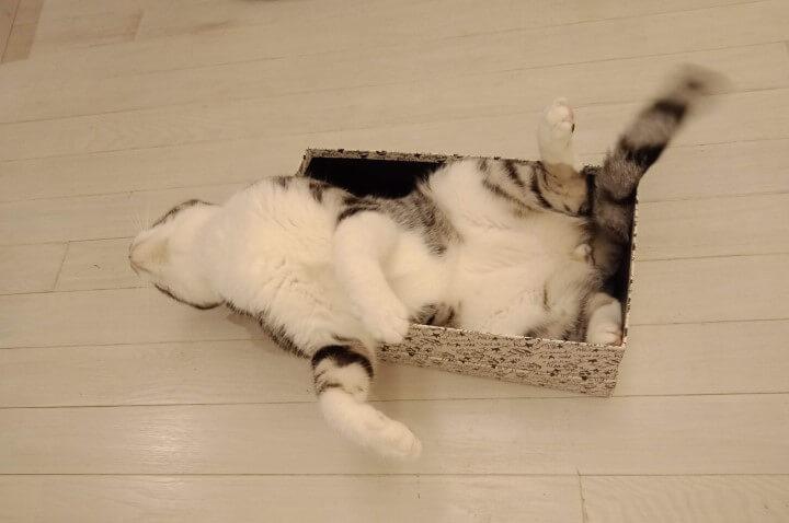 箱が好きなウィル君